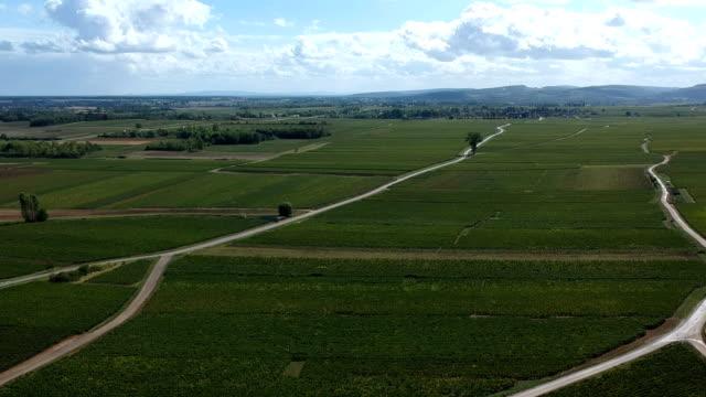 Vineyards of Meursault, Burgundy, France video