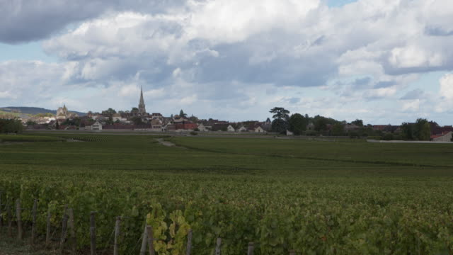 Vineyards of Meursault, Burgundy, France