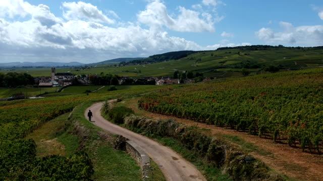 Vineyards of Pommard video
