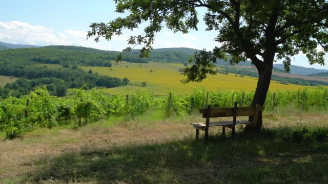 weinberge-reihen bei sonnenuntergang, schöne agrarlandschaft - winzer sitzend trauben stock-videos und b-roll-filmmaterial