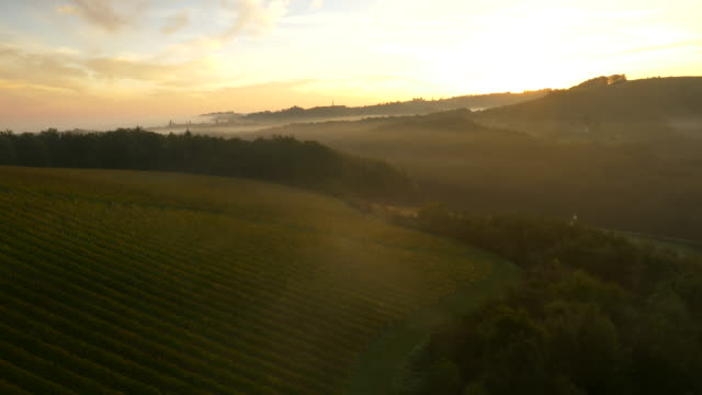 AERIAL Viniferous Countryside At Dawn video