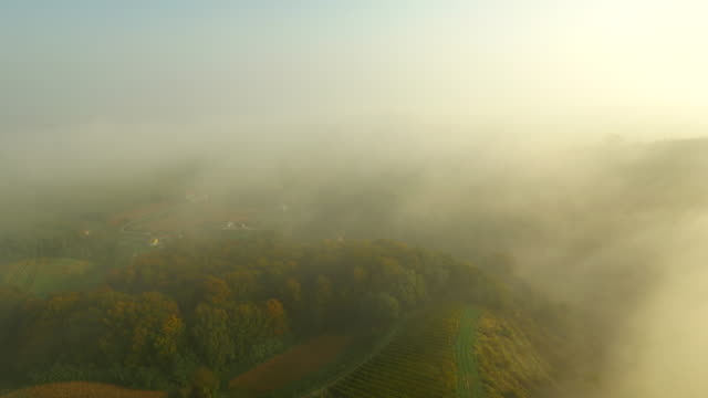AERIAL Viniferous Region At Dawn HD1080p: AERIAL shot of viniferous landscape in the dawn. Also available in 4K resolution. monoculture stock videos & royalty-free footage