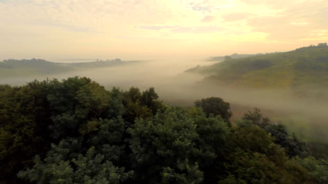 AERIAL Viniferous Region In The Fog video