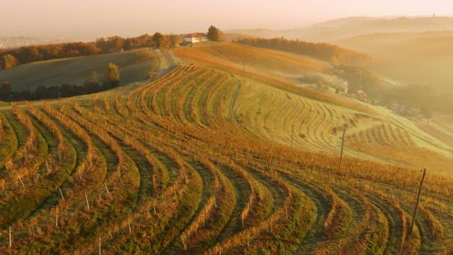 regione di prekmurje viniferous aerea - paesaggio collinare video stock e b–roll