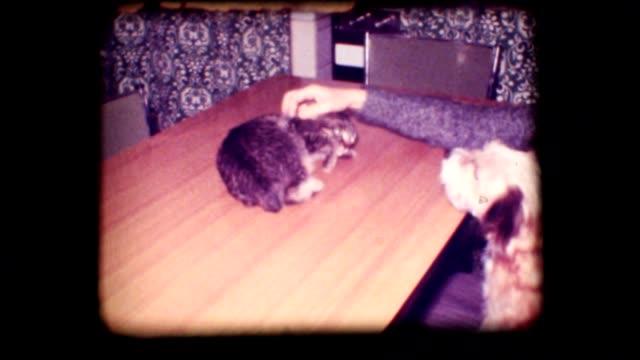 Vintage 8mm. Dog barking at frightened cat. video