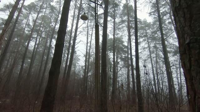 Vintage Faulty Lantern lighting in Foggy Park