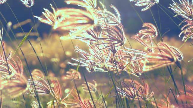 vintage gräs fält flödande vind på sunset - generator bildbanksvideor och videomaterial från bakom kulisserna