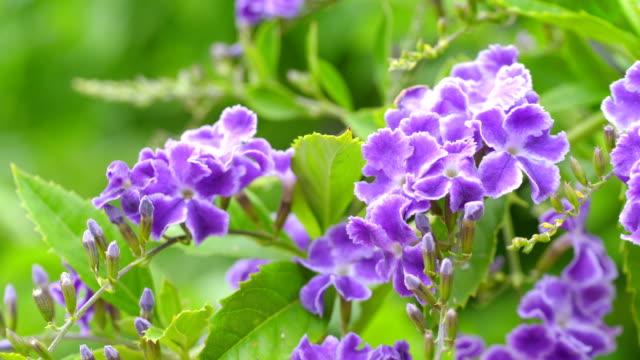 violette blumen im garten in 4k zeitlupe 60fps - einzelne blume stock-videos und b-roll-filmmaterial