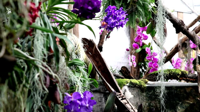 HD CLIP: Violet orchids in garden video