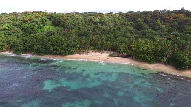 vidéos et rushes de vue aérienne de drone vierge préservée île des caraïbes - forêt tropicale humide