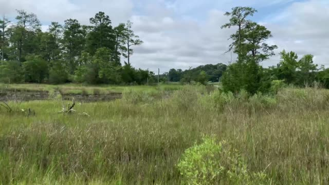 Virginia Beach Marsh Lands Side view from a vehicle of Virginia Beach Marsh land marsh stock videos & royalty-free footage