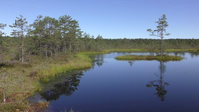 Viru bogs at Lahemaa national park, Estonia view of Viru bogs at Lahemaa national park, Estonia estonia stock videos & royalty-free footage