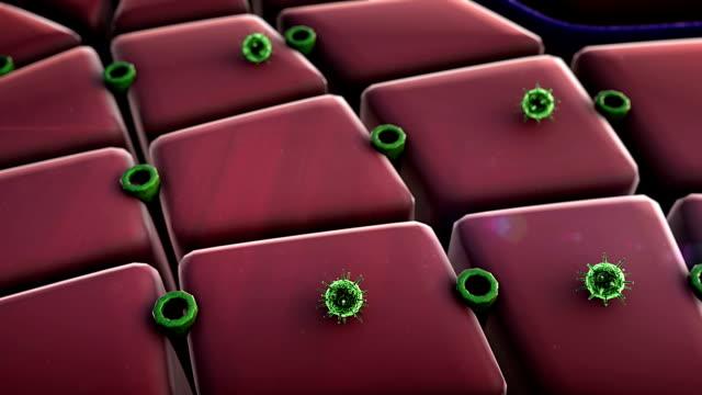virus, cells video