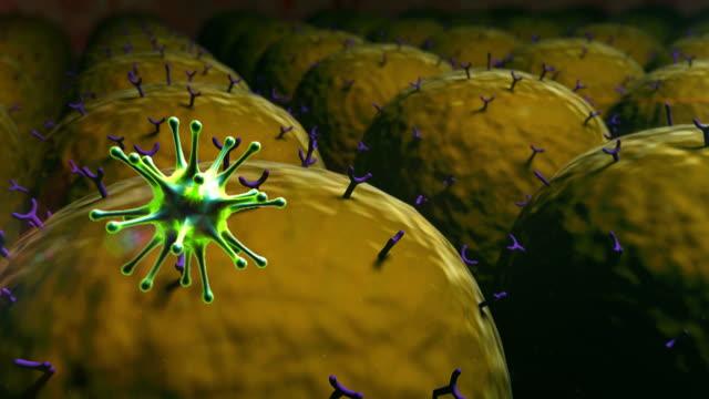 virus, fat cells video