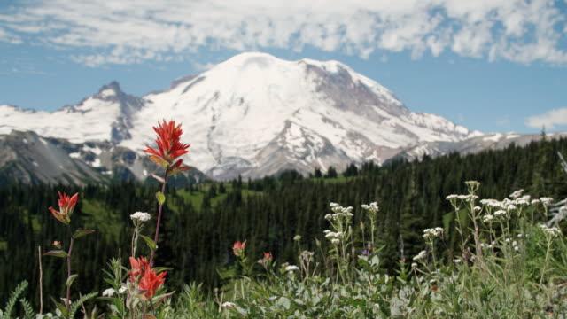 Mt レーニア野草のワシントン、自然の背景を参照してください。 ビデオ