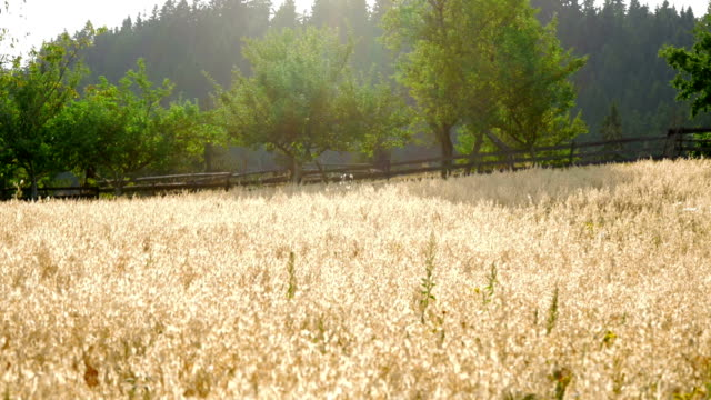 visiting mountain farm - white background стоковые видео и кадры b-roll