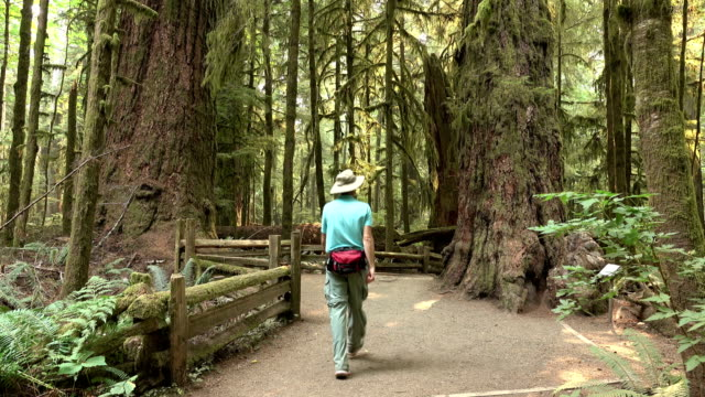 Visitor hikes Cathedral Grove ancient coastal forest MacMillan Provincial Park Vancouver Island British Columbia video