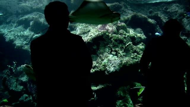 外来のお客様には、水族館 - 自然旅行点の映像素材/bロール