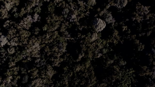 Vista aérea da mata Atlântica - vídeo