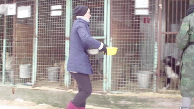犬小屋でのボランティア - 動物園点の映像素材/bロール