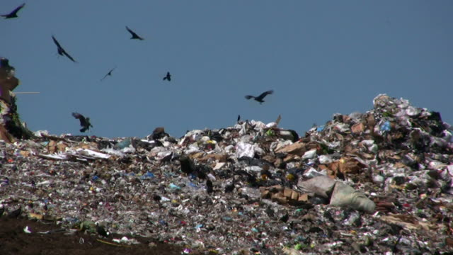 Vultures Flying at the Landfill video
