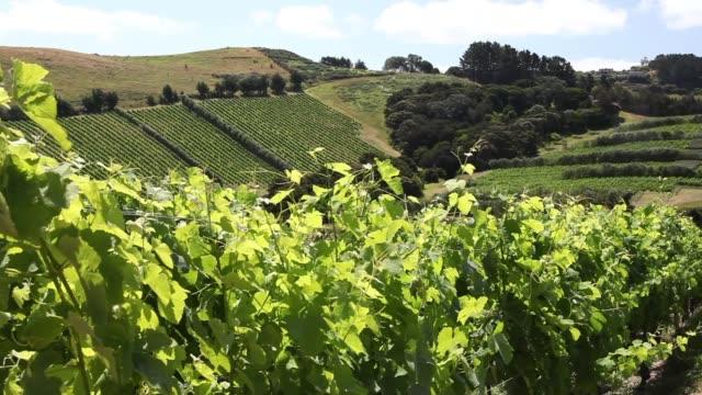 Waiheke Island New Zealand in the Hauraki Gulf vineyards, olive groves and beaches video
