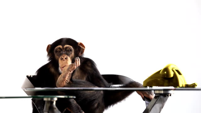 Waiting Monkey video