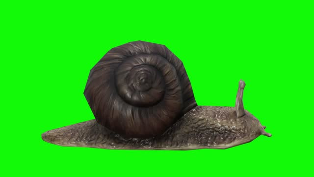 Waiting snail on green screen. The concept of animal, wildlife, games, back to school, 3d animation, short video, film, cartoon, organic, chroma key, character animation, design element, loopable