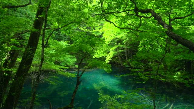 青森県白神山地の wakitubonoike 池 - 広大点の映像素材/bロール