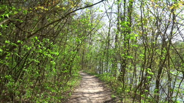 Walk Along the Path in Spring Forest Near The River video