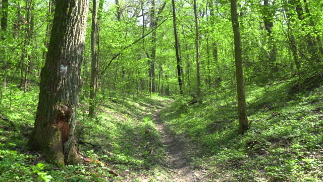 Walk Along the Path in Spring Forest video