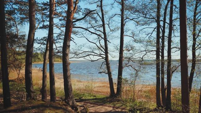 vídeos de stock e filmes b-roll de walk along the shore of the lake on a sunny spring day - letónia