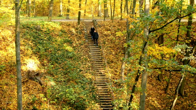 Walk autumn leaves park video