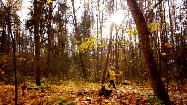 walk in autumn forest - дубовый лес стоковые видео и кадры b-roll