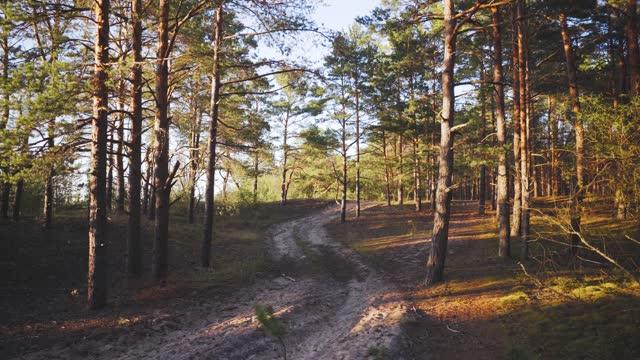 vídeos de stock e filmes b-roll de walk in the baltic pine dunes in spring - letónia
