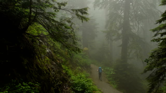 Walk in the woods Solo hiker walking through a moody lush green temperate rain forest vancouver canada stock videos & royalty-free footage