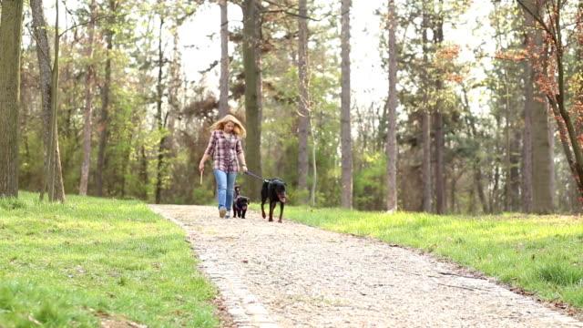gehen sie die hunde im park - hundesitter stock-videos und b-roll-filmmaterial