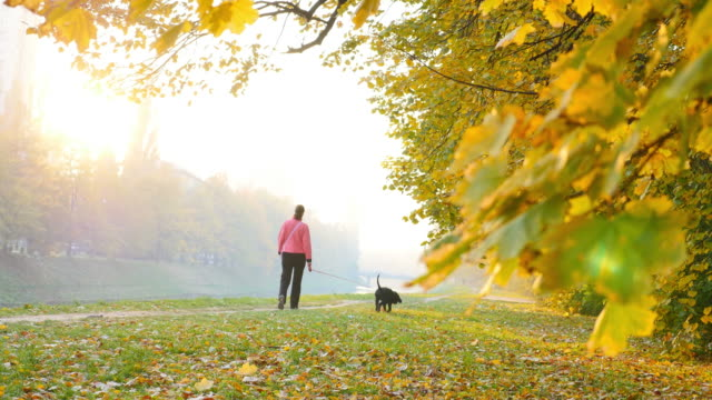 A walk with the dog in the nature during fall time video