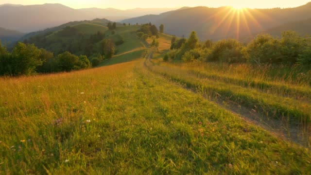 walking along a country dirt road along a mountain range. sun sets over the mountain and illuminates flowers and green grass. hiking, eco tourism concept during isolation pandemic period - transcarpazia video stock e b–roll
