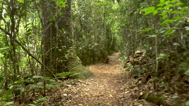 vidéos et rushes de marcher le long sentier de randonnée dans la forêt tropicale australienne 4k pov - paysage extrême