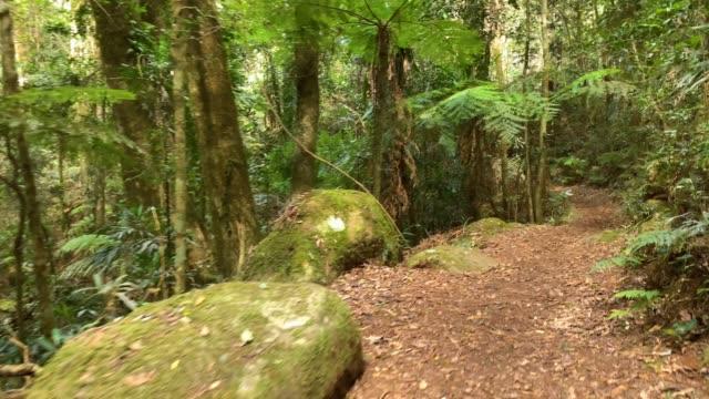 vidéos et rushes de marcher le long sentier de randonnée dans la forêt tropicale australienne 4k pov - étendue sauvage scène non urbaine