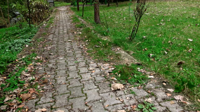 walking along mosaic stone paving autumn leaves path in forrest, sony uhd steadycam shoot, stock video video