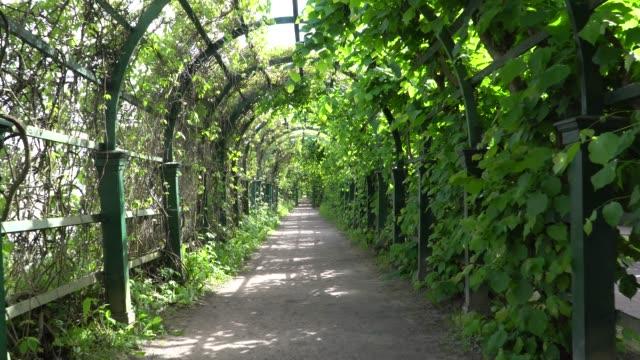 vandring längs den gröna gränden i parken. - peter the apostle bildbanksvideor och videomaterial från bakom kulisserna