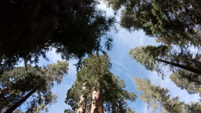 walking among the giant sequoia trees in kings canyon national park, usa - время дня стоковые видео и кадры b-roll