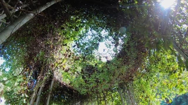stockvideo's en b-roll-footage met wandel- en opzoeken in groene wijnstok poort met zonlicht flare - boog architectonisch element