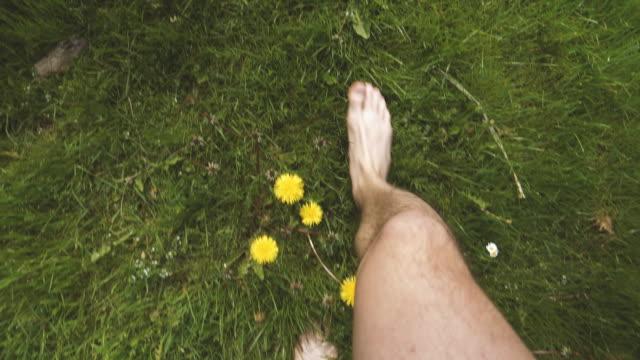 walking barefoot among dandelion - scalzo video stock e b–roll