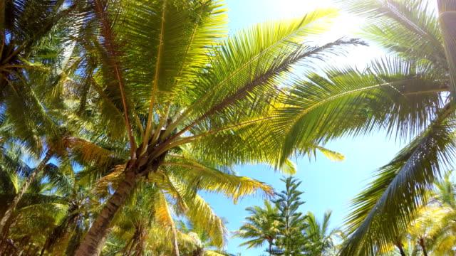 熱帯木グローブ デジタル安定化povの手のひらの間を歩きます。暖かい国の休暇の概念 4 k 映像。 - リゾート点の映像素材/bロール