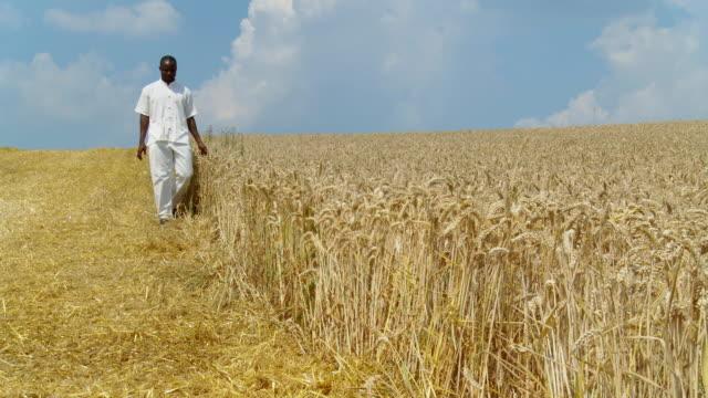 HD DOLLY: Walking By A Wheat Field video