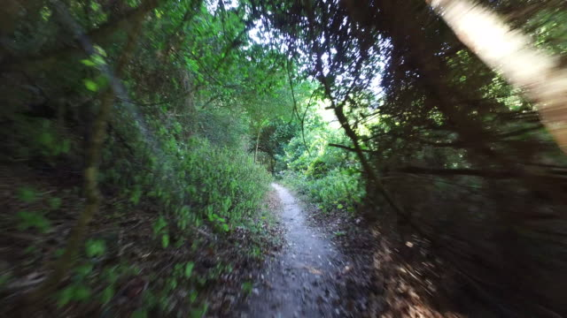 POV walking down a forest path video