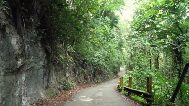 Walking down curved paved road in Ocho Rios with steel posts and guard rail on one side and rocky cliff on other on tropical island of Jamaica with lush green foliage trees and vines lining road.